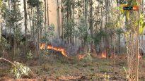 Incêndio consumiu monte em Paradela, na Trofa