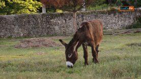 burros de zeca