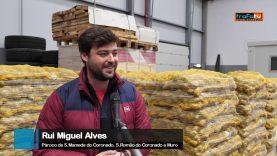 24 toneladas de batatas doadas a instituições da Trofa
